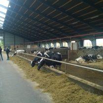 Landbrugsbyggeri - Kvæg fra Søren V. Jensen